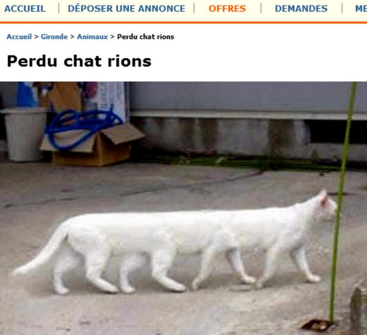 chat gratuit pour rencontre Aulnay-sous-Bois